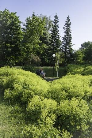 140711 Vacker morgon i Torgbrinkens park