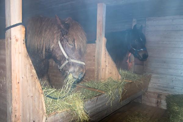 Forböndernas hästar vilar ut i Lockne kyrkstallar.