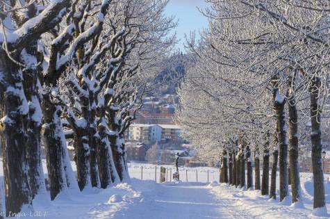 344.Vinterträd