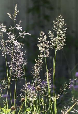 Grässtrån