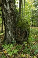 En oväntad glänta i skogen