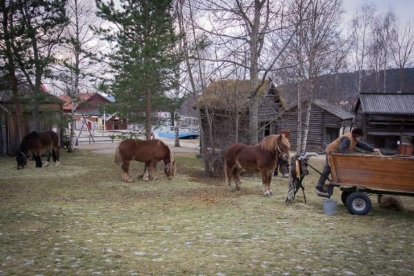 Forbönderna är framme med sina hästar och varor på Jamtlis julmarknad.
